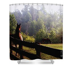 Shower Curtain featuring the painting Arabian Horses In Field by Debra Crank