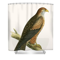 Arabian Kite Shower Curtain by English School
