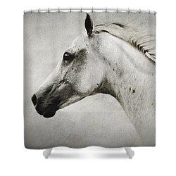 Arabian White Horse Portrait Shower Curtain