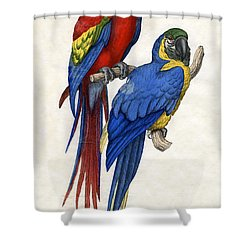 Aracangua And Blue And Yellow Macaw Shower Curtain