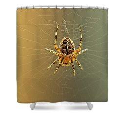 Araneus Diadematus Shower Curtain