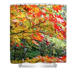 Arboretum Autumn Leaves Shower Curtain