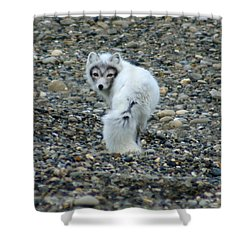 Arctic Fox Shower Curtain by Anthony Jones