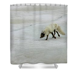 Arctic Fox On Ice Shower Curtain by Anthony Jones