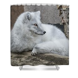 Arctic Fox Profile Shower Curtain