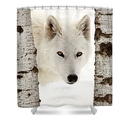 Arctic Wolf Seen Between Two Trees In Winter Shower Curtain by Mark Duffy