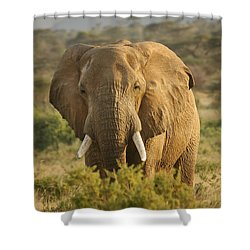 Are You Looking At Me? Shower Curtain by Gary Hall