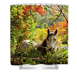 Shower Curtain featuring the photograph Are You My Friend? by Jeff Folger