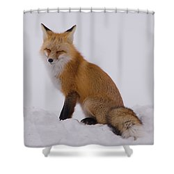 Are You Sleeping Shower Curtain