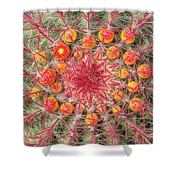 Arizona Barrel Cactus Shower Curtain by Delphimages Photo Creations