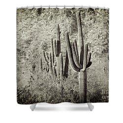 Arizona Desert 2 Shower Curtain