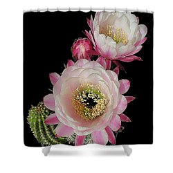 Arizona Desert Cactus Flowers Shower Curtain by Merton Allen