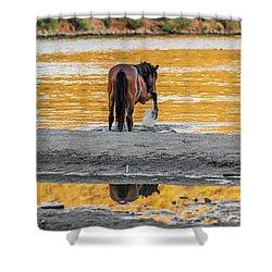 Arizona Wild Horse Playing In Water Shower Curtain