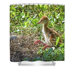 Are You Coming Out? Shower Curtain