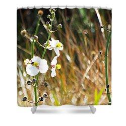 Arrowhead Blooms Shower Curtain by Audrey Van Tassell