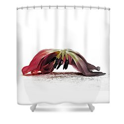 Ars Moriendi Shower Curtain