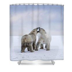 Artic Antics Shower Curtain