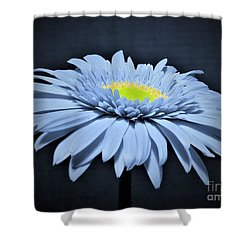 Artic Blue Gerber Daisy Shower Curtain