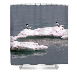 Arctic Terns On A Bergy Bit Shower Curtain