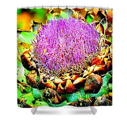 Artichoke Going To Seed  Shower Curtain
