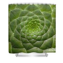 Artistic Nature Green Aeonium Cactus Macro Photo 203 Shower Curtain