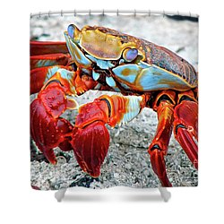 Artistic Nature Red And Blue Rainbow Crab 908 Shower Curtain
