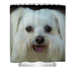Artistic Puppy Shower Curtain
