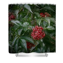 Shower Curtain featuring the photograph Artistic Rowanberries 2015 by Leif Sohlman