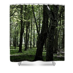 Shower Curtain featuring the photograph Artistic Tree by Michelle Audas