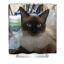 Artist's Assistant Shower Curtain by Sheri Keith