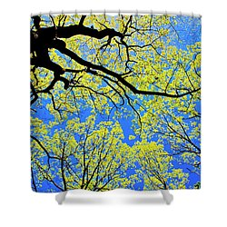Artsy Tree Canopy Series, Early Spring - # 03 Shower Curtain