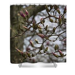 Today The World Is New Again Shower Curtain by Karen Casey-Smith