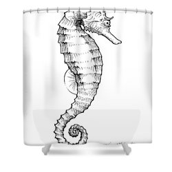 shower curtain featuring the drawing seahorse black and white sketch by karen whitworth