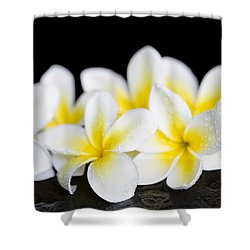 Shower Curtain featuring the photograph Plumeria Obtusa Singapore White by Sharon Mau