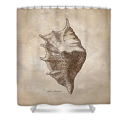 Shower Curtain featuring the drawing Distressed Antique Nautical Seashell 1  by Karen Whitworth