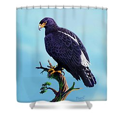 Verreaux's Eagle  Shower Curtain