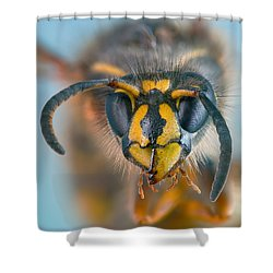 Shower Curtain featuring the photograph Wasp Portrait by Alexey Kljatov