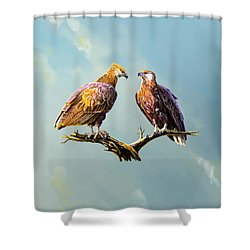Madagascar Fish Eagle  Shower Curtain