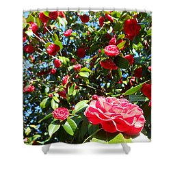 Uncommon Camellias Shower Curtain