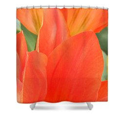 Orange Emperor Tulips Shower Curtain