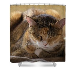 How To Meditate Shower Curtain by Karen Casey-Smith