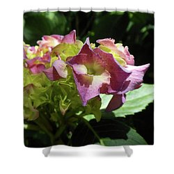 Hydrangea Flowers Fit For A Fairy Shower Curtain