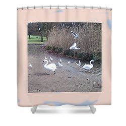 Swans 4 Shower Curtain