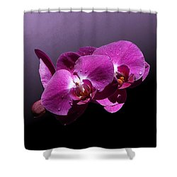 Pink Orchid Flowers Shower Curtain