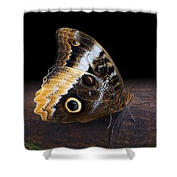 Yellow-edged Giant Owl Butterfly Shower Curtain