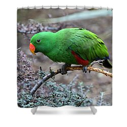 Green Male Eclectus Parrot Shower Curtain