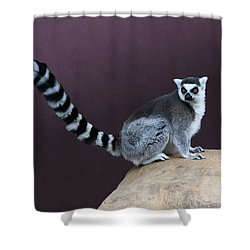 Thereby Hangs A Tail Shower Curtain