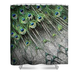 Poised Peacock Shower Curtain