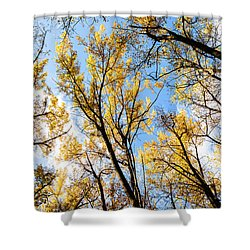 Looking Up Shower Curtain by Bill Kesler