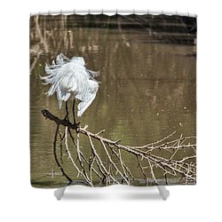 Fluff Time Shower Curtain by Bill Kesler